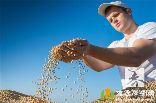煮黄豆水功效与作用点