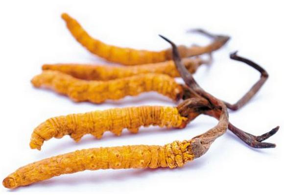 冬虫夏草怎么吃营养价值高,什么样的冬虫夏草好?