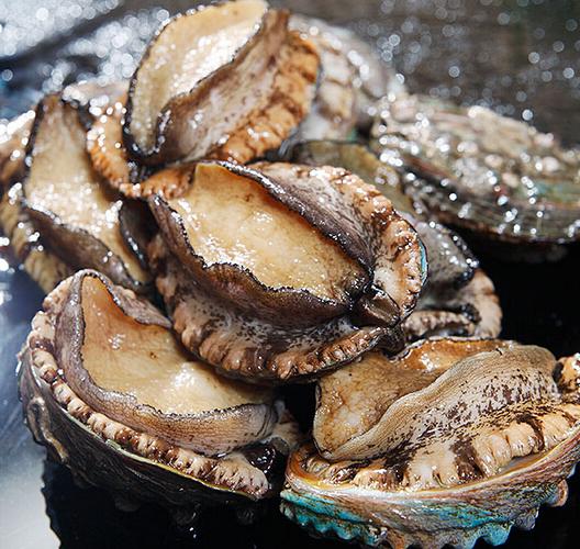 鲍鱼的营养价值,功效与作用,食用方法是怎样的?