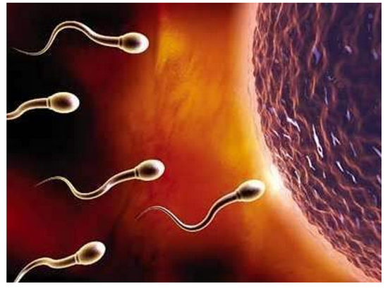 精子质量标准多少正常,颜色什么样,备孕男性吃啥好?