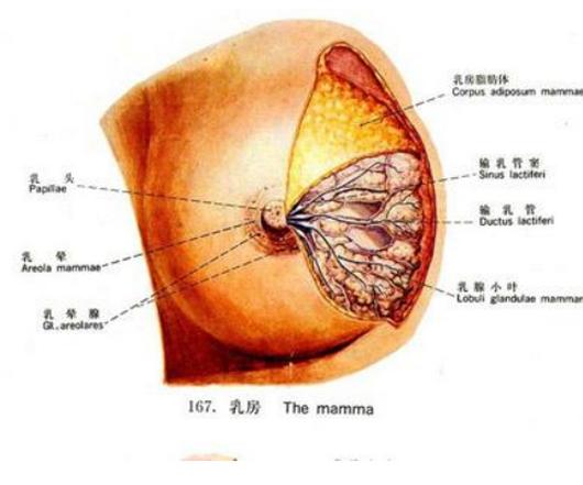 乳房湿疹多长时间能好,怎么治疗,孕妇得病正常吗?