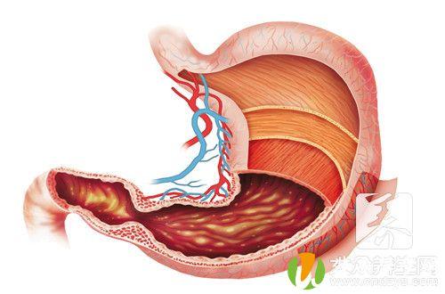 健脾胃最好的三个方法