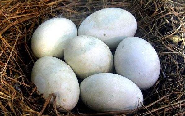 吃鹅蛋有什么好处,儿童吃有何益处?早上吃还是晚上吃?