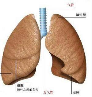 尘肺病的早期症状有哪些?需要怎么治疗?