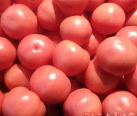 西红柿搭一宝抗癌效果太惊人
