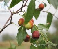 哪种水果是真正的Vc之王?