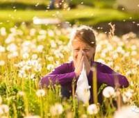 如何预防花粉症?治疗花粉症的偏方
