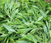 茶叶的功效与作用,茶叶的作用,茶叶的营养价值