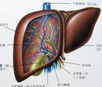 肝癌的早期症状图