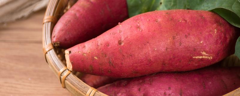 煮红薯要多久?电饭锅里放多少水来煮红薯