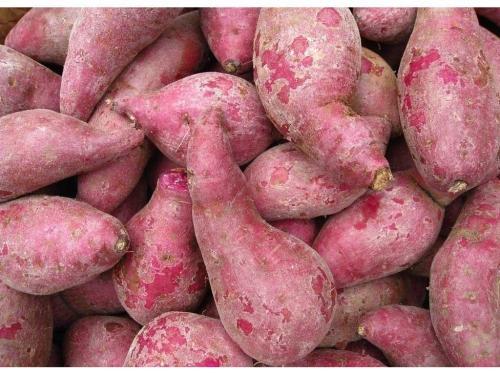 如何吃紫薯可以防治重度便秘?